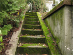Moss covered stairs.
