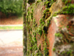 Moss covered bricks